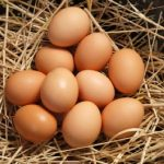 What are Organic Eggs?