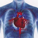 The Heart and Heart Disease: How to Prevent a Heart Attack