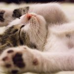 Why Sleeping Well Is Important