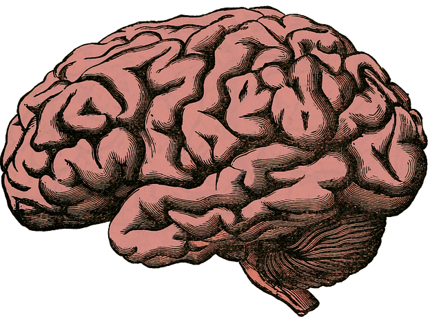 Know More About Your Brain And How To Keep It Healthy